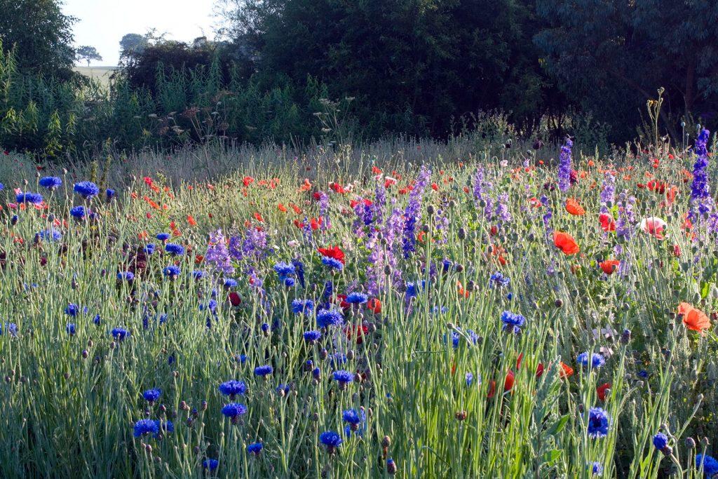 Herbaceous   Killeshandra Garden Centre   Cavan
