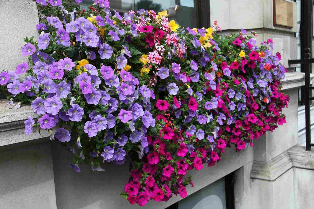Window Boxes   Killeshandra Garden Centre   Cavan